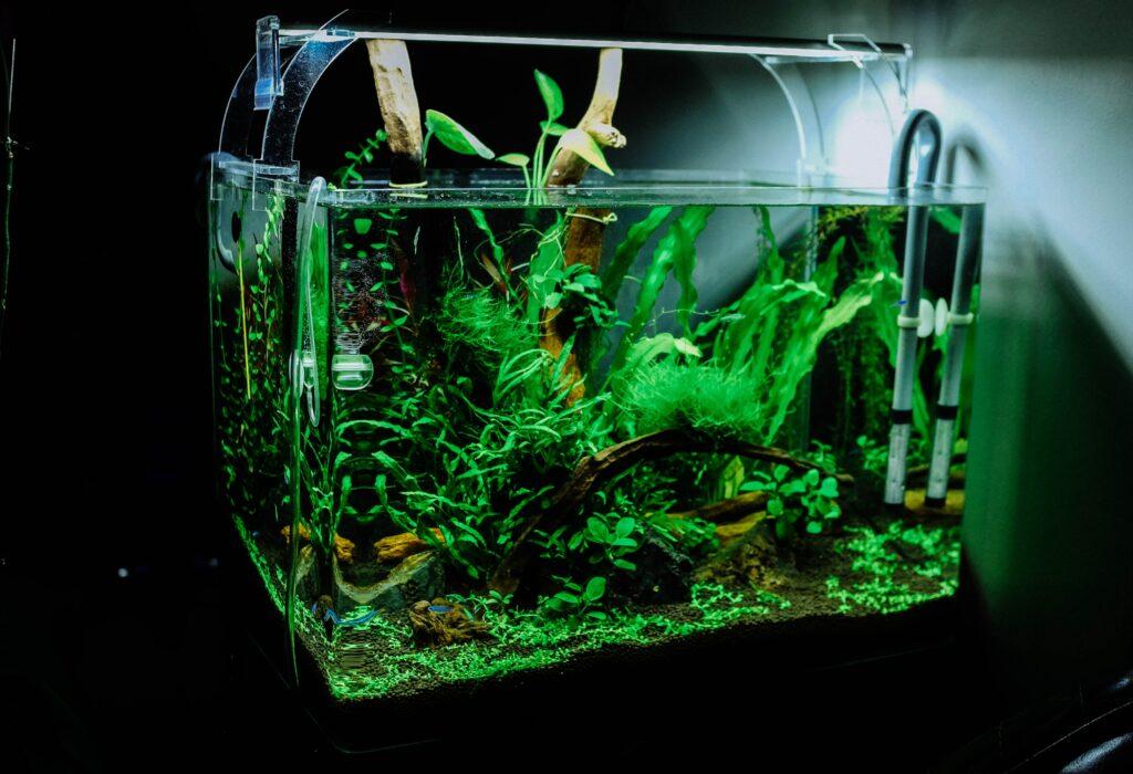 Frodigt grønt akvarie uden mærkbare algeproblemer.